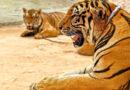 Таиланд продвигает меры по защите животных в условиях пандемии