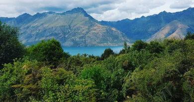 Посадите дерево надежды в Новой Зеландии, чтобы начать 2021 год на положительной ноте