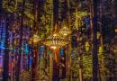 Прогуляйтесь по верхушкам деревьев по лучшим в мире дорожкам под навесом леса